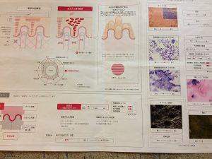 肌診断シート2
