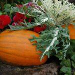 林修の今でしょ講座!秋野菜の栄養&レシピと食中毒O157について