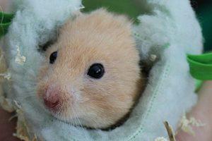着る毛布 着る寝袋