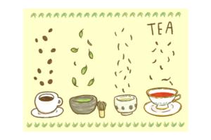 今でしょ講座 お茶